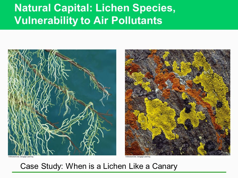 Natural Capital: Lichen Species, Vulnerability to Air Pollutants