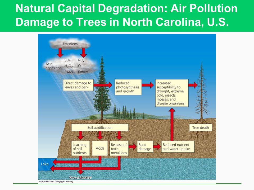Natural Capital Degradation: Air Pollution Damage to Trees in North Carolina, U.S.