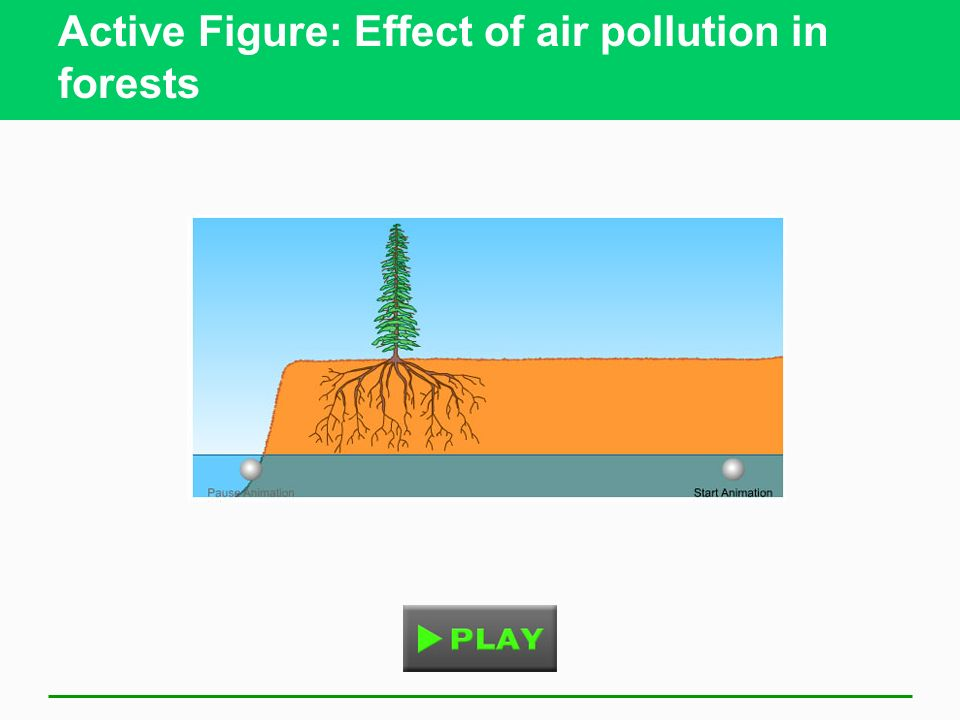 Active Figure: Effect of air pollution in forests