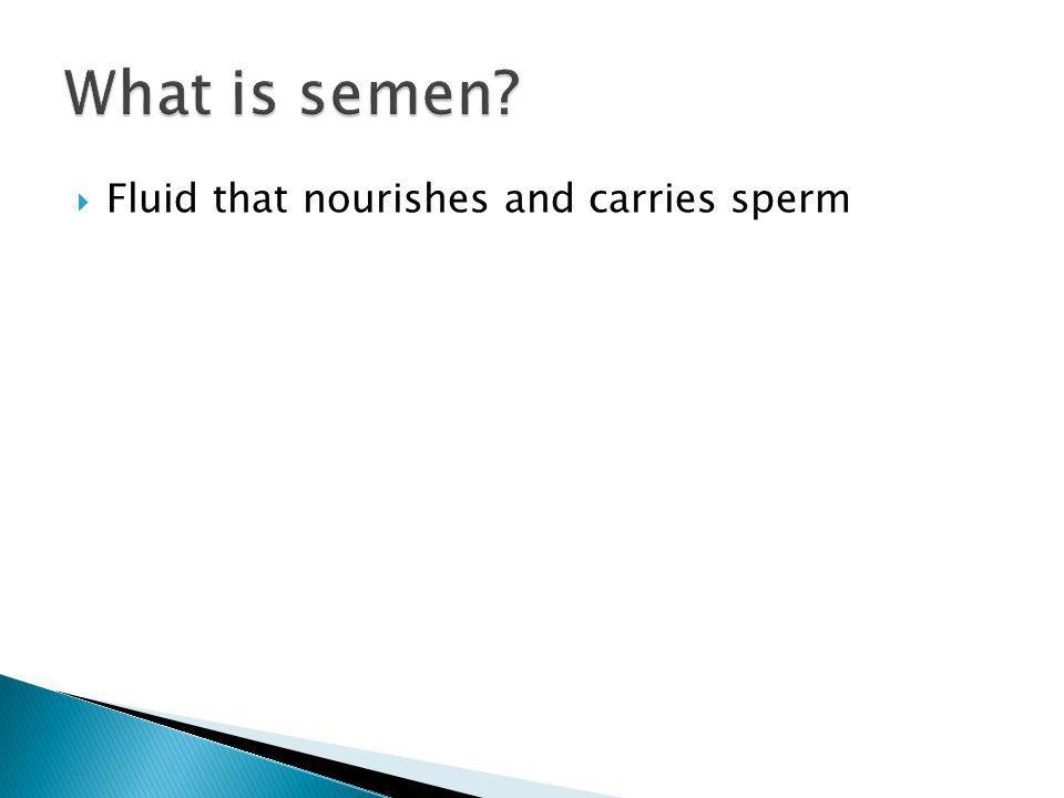 What is semen Fluid that nourishes and carries sperm