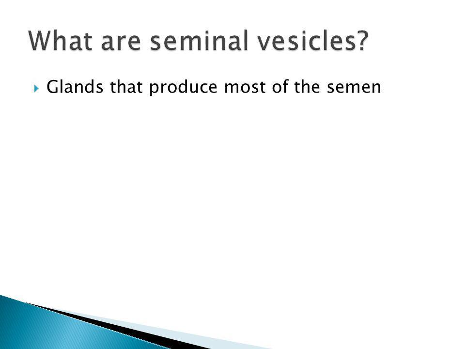 What are seminal vesicles
