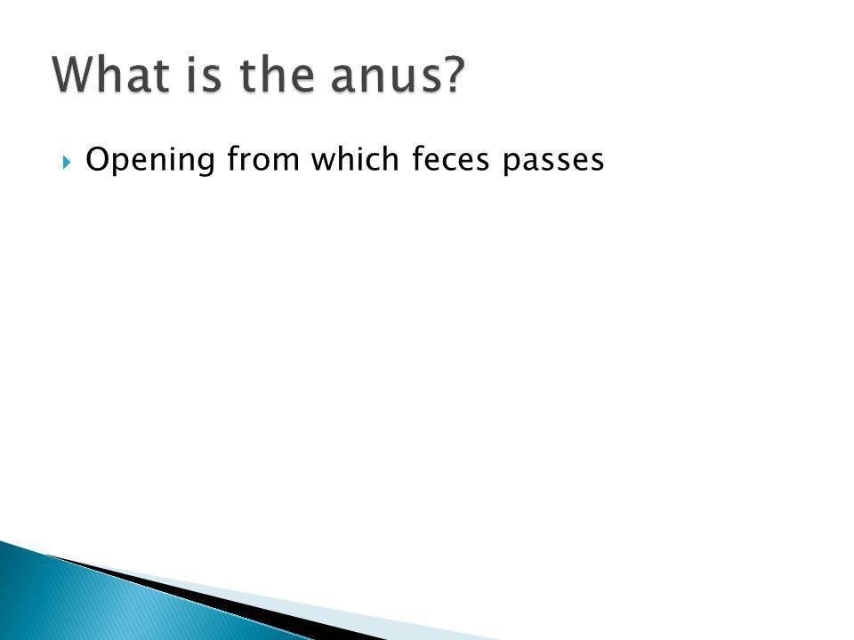 What is the anus Opening from which feces passes