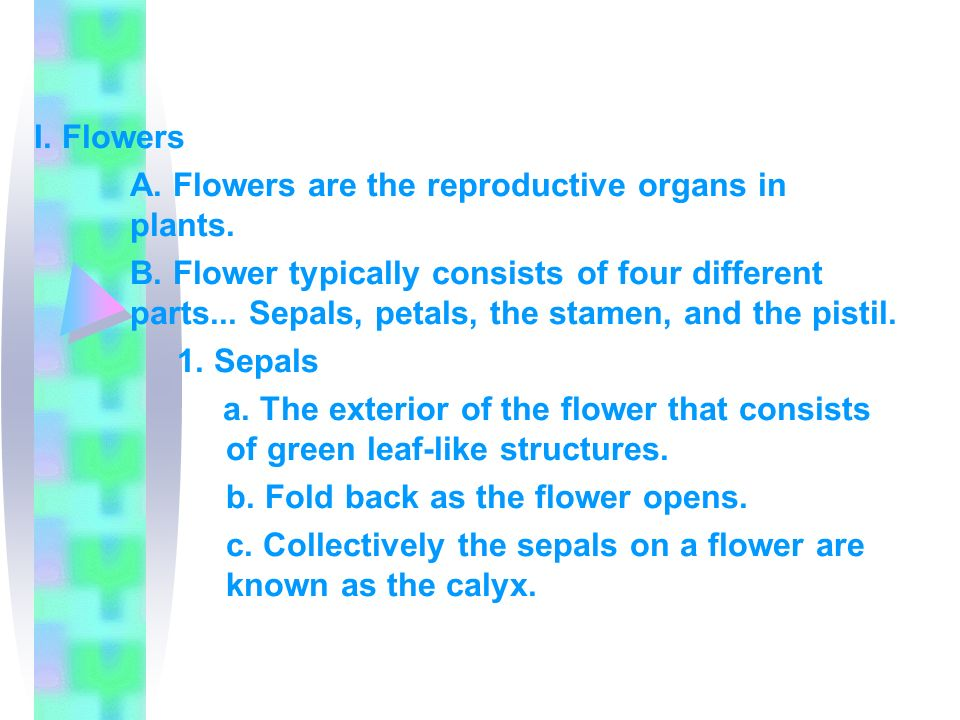 I. Flowers A. Flowers are the reproductive organs in plants.