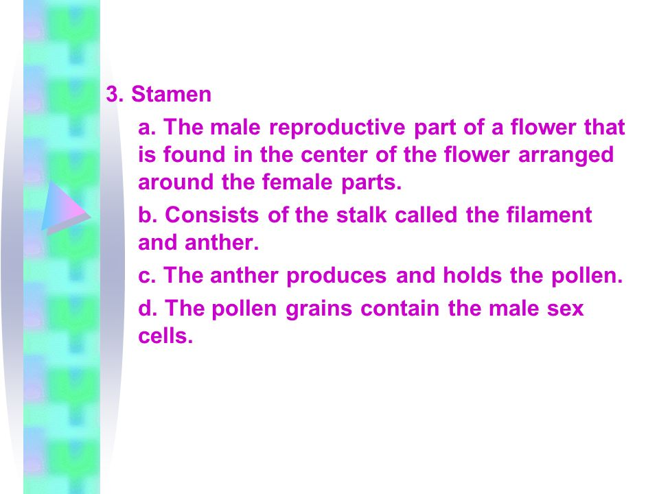 3. Stamen a. The male reproductive part of a flower that is found in the center of the flower arranged around the female parts.