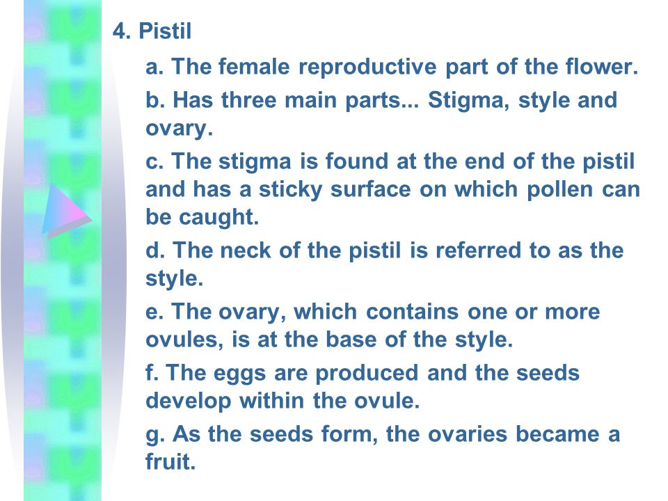 4. Pistil a. The female reproductive part of the flower.