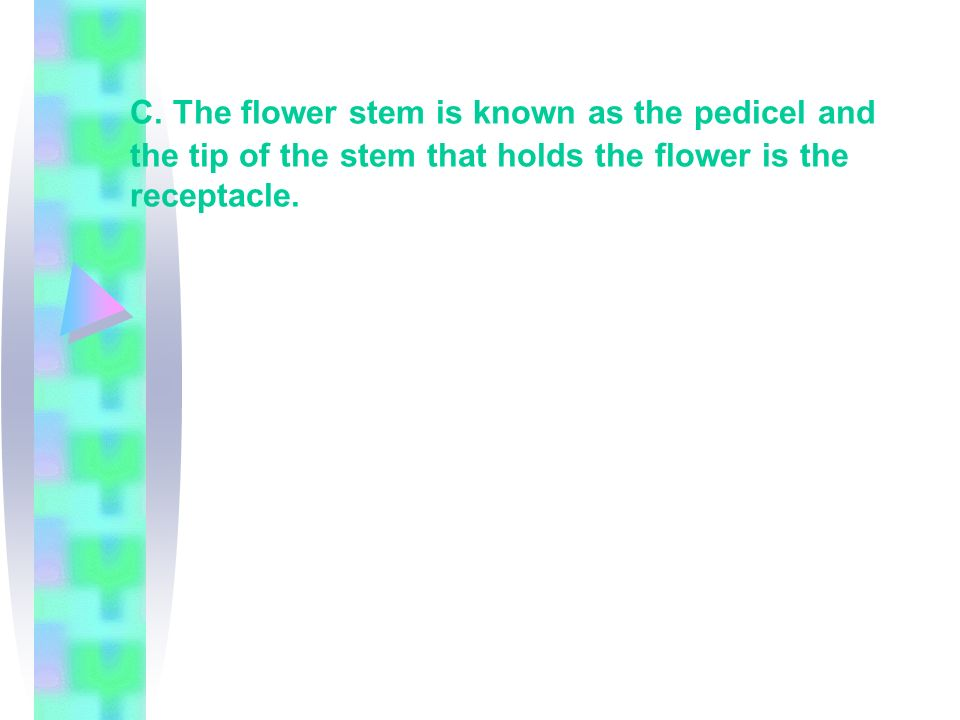 C. The flower stem is known as the pedicel and