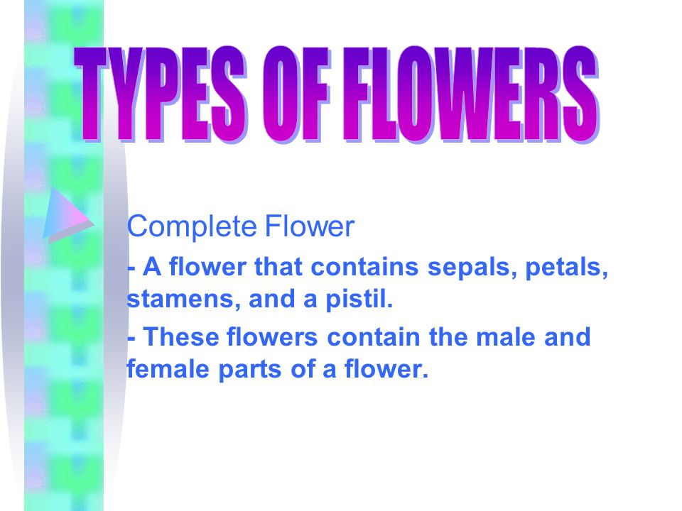 TYPES OF FLOWERS Complete Flower