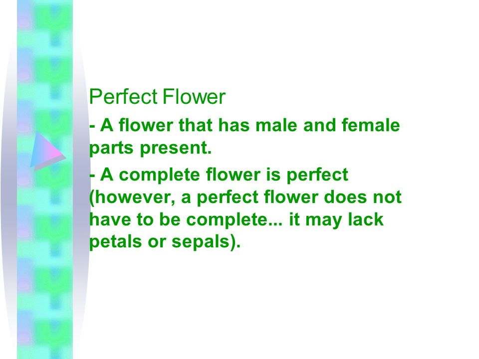 Perfect Flower - A flower that has male and female parts present.