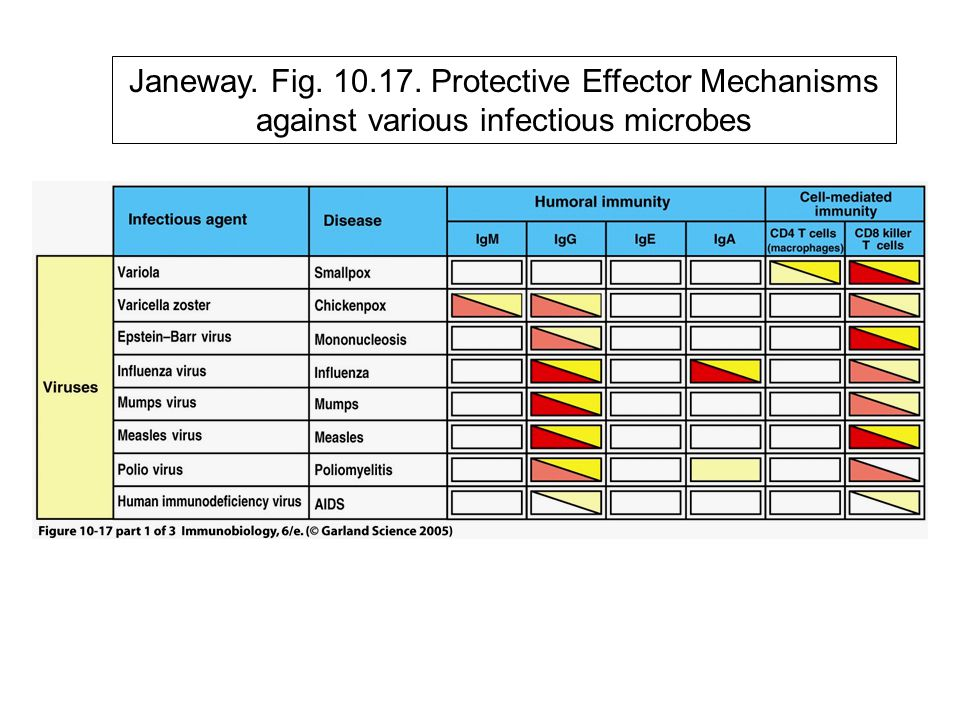 Janeway. Fig. 10.17. Protective Effector Mechanisms against various infectious microbes