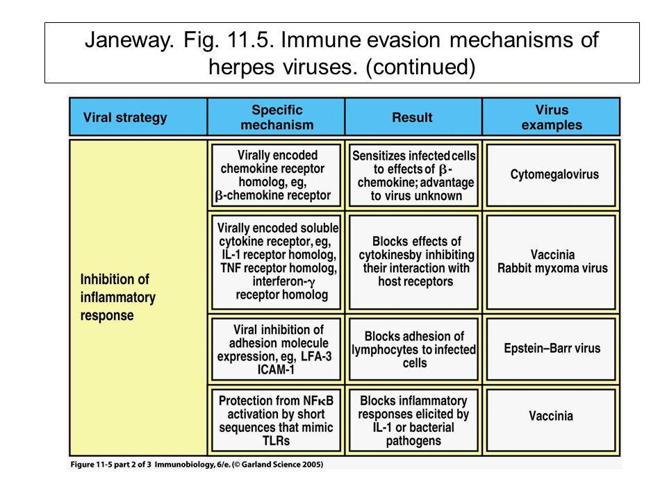 Janeway. Fig. 11. 5. Immune evasion mechanisms of herpes viruses