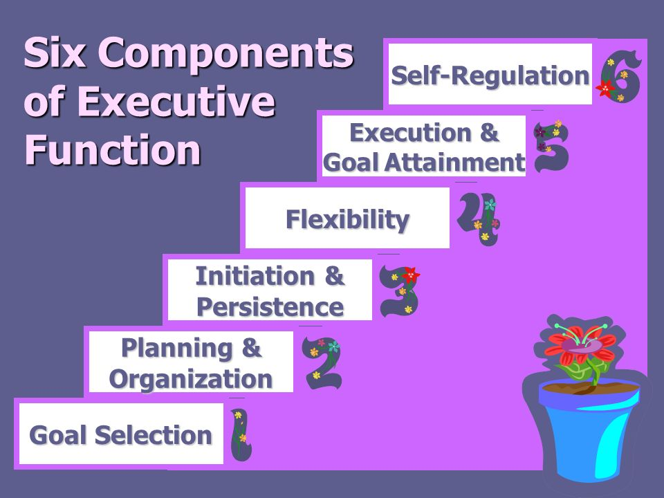 Six Components of Executive Function