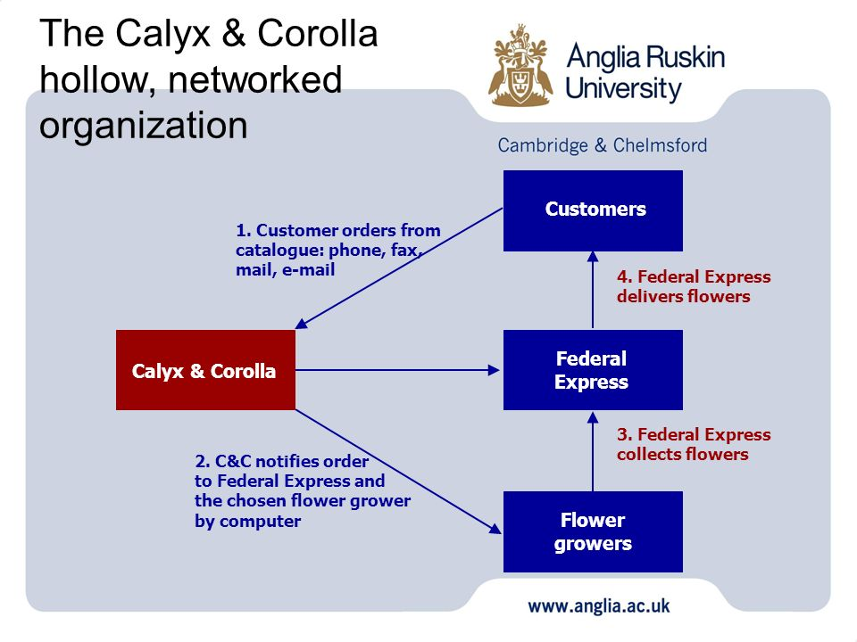 The Calyx & Corolla hollow, networked organization