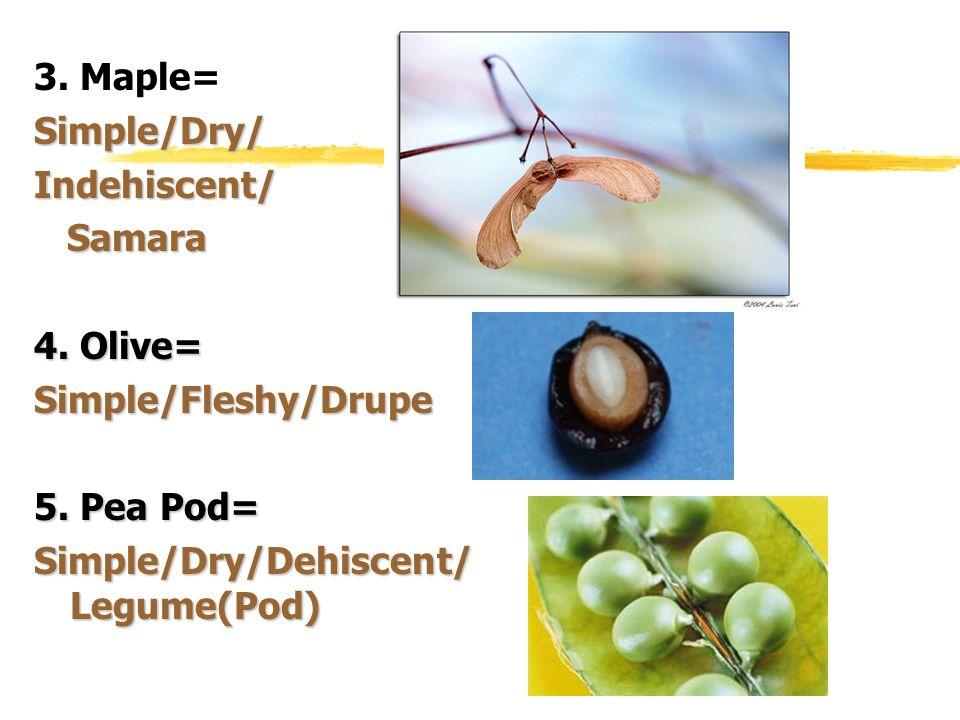 3. Maple= Simple/Dry/ Indehiscent/ Samara. 4.