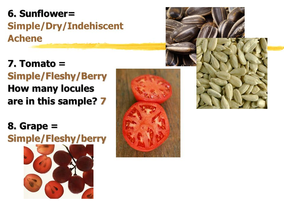 6. Sunflower= Simple/Dry/Indehiscent. Achene. 7. Tomato = Simple/Fleshy/Berry. How many locules.