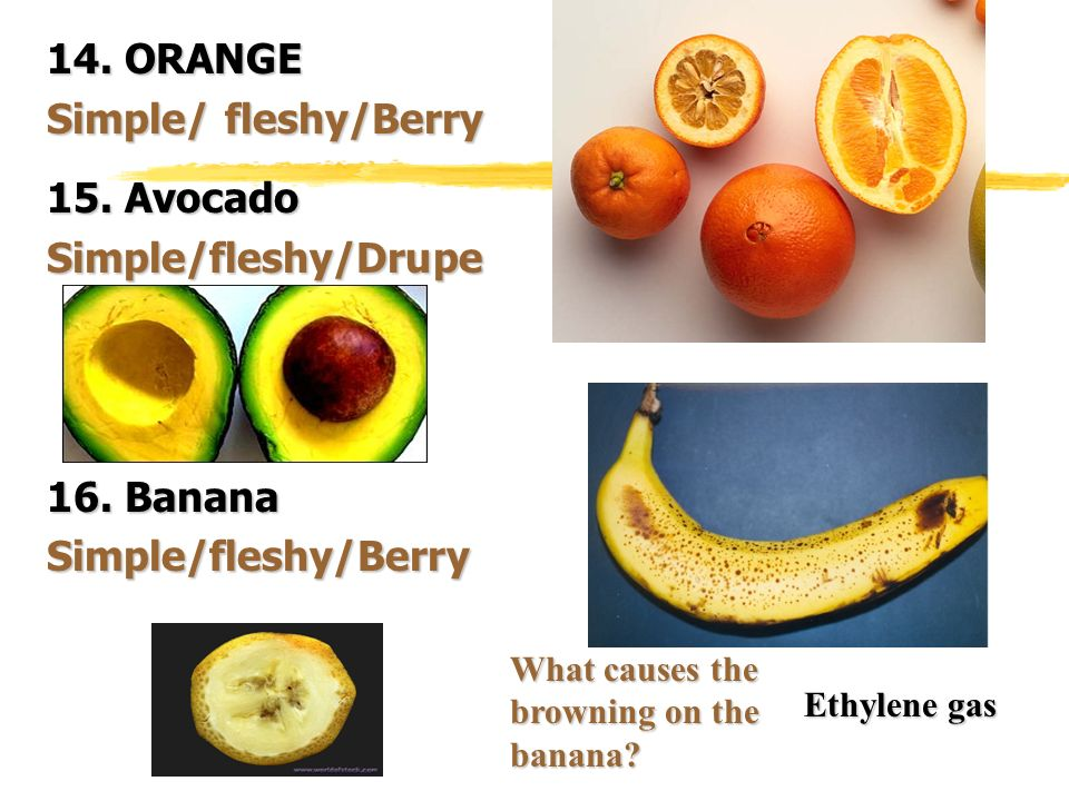 14. ORANGE Simple/ fleshy/Berry 15. Avocado Simple/fleshy/Drupe