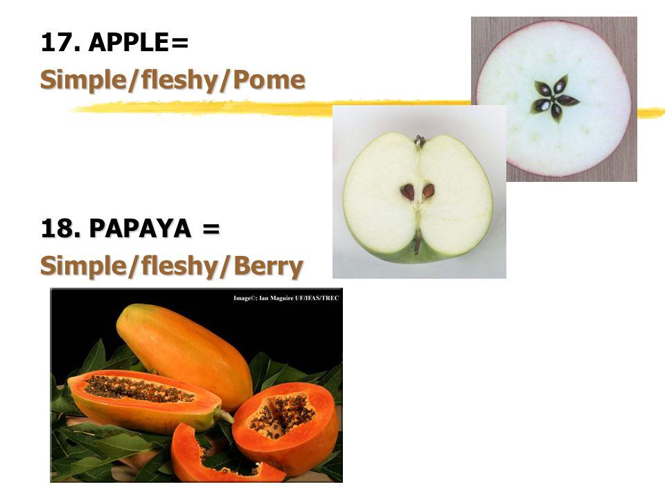 17. APPLE= Simple/fleshy/Pome 18. PAPAYA = Simple/fleshy/Berry