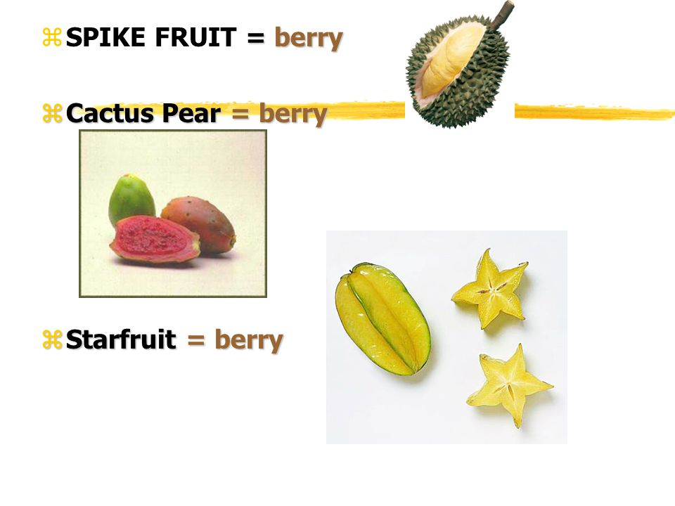 SPIKE FRUIT = berry Cactus Pear = berry Starfruit = berry