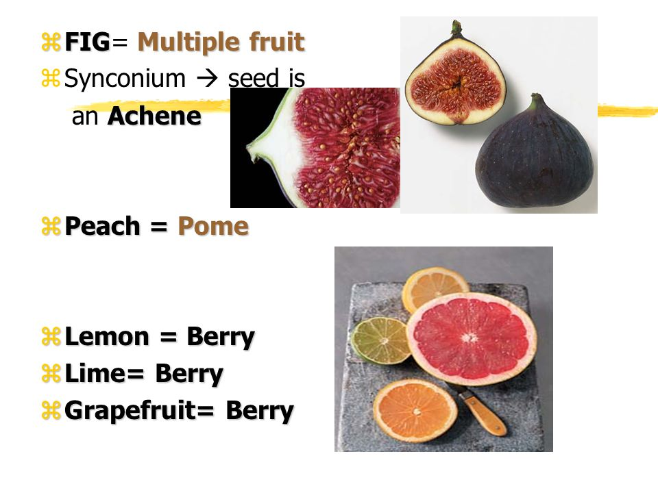 FIG= Multiple fruit Synconium  seed is. an Achene.