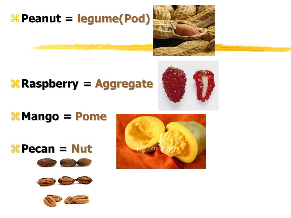 Peanut = legume(Pod) Raspberry = Aggregate Mango = Pome Pecan = Nut