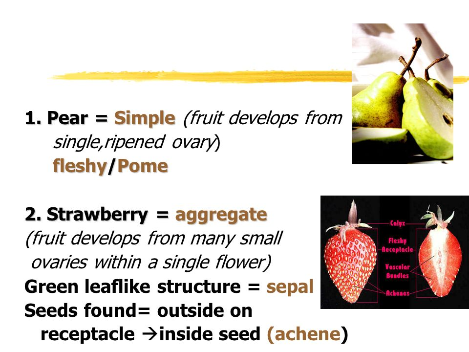 1. Pear = Simple (fruit develops from