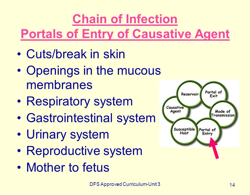 Chain of Infection Portals of Entry of Causative Agent
