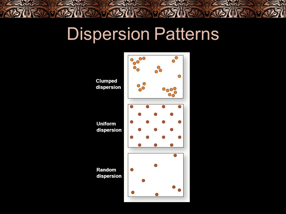 Dispersion Patterns Clumped dispersion Uniform Random