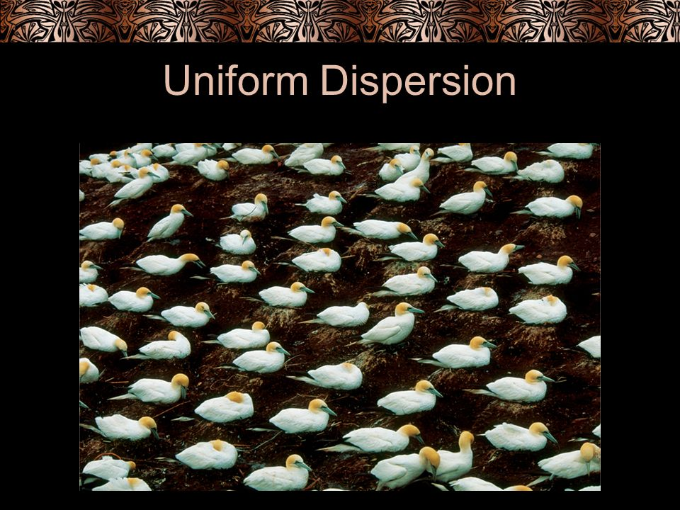 Uniform Dispersion