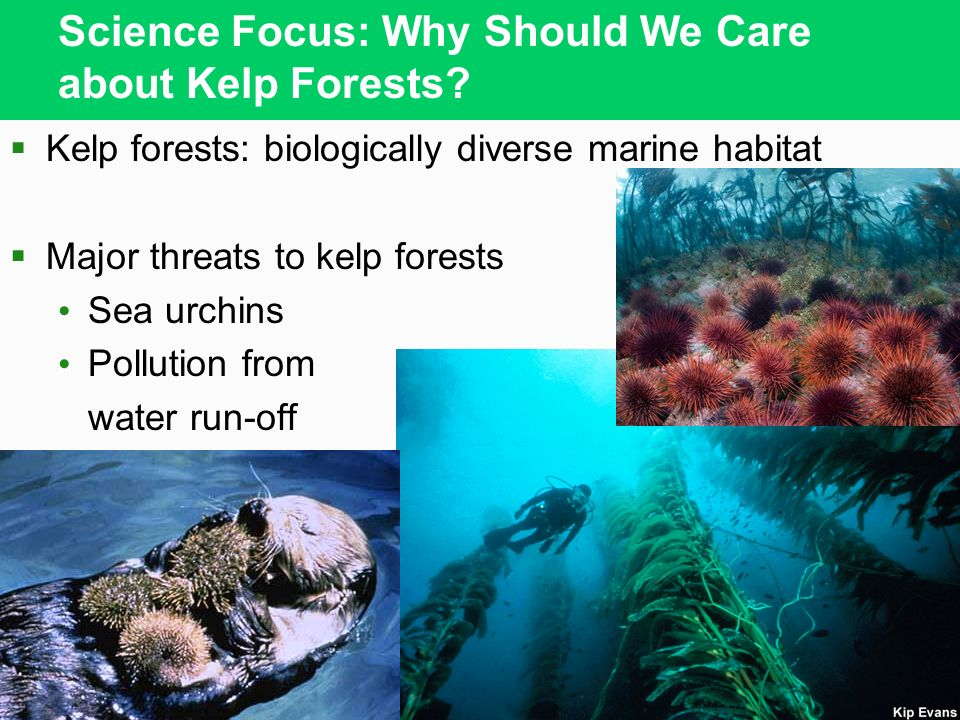 Science Focus: Why Should We Care about Kelp Forests