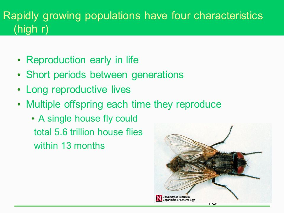 Rapidly growing populations have four characteristics (high r)