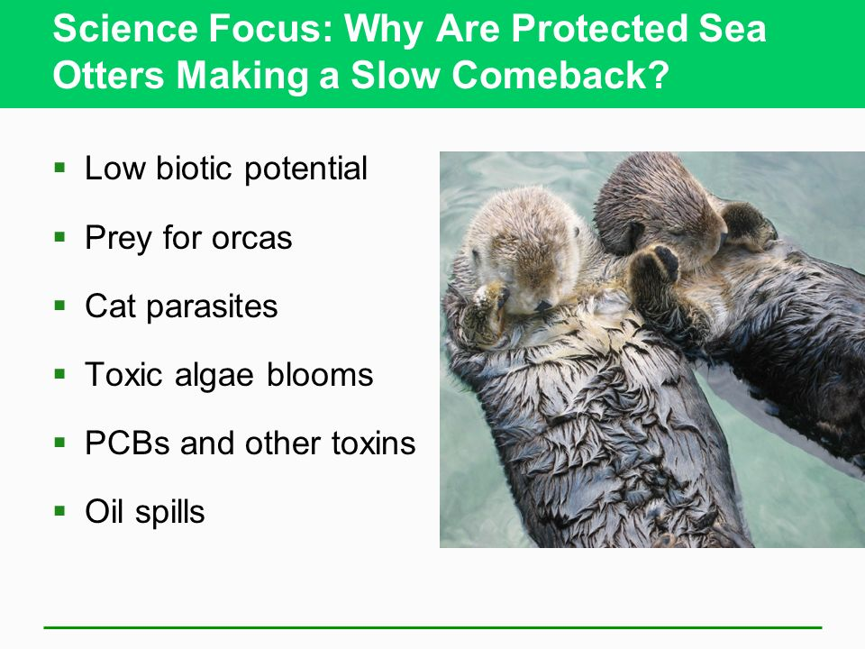 Science Focus: Why Are Protected Sea Otters Making a Slow Comeback