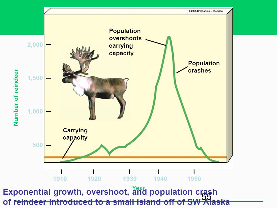 Population overshoots. carrying. capacity. 2,000. Population crashes. 1,500. Number of reindeer.