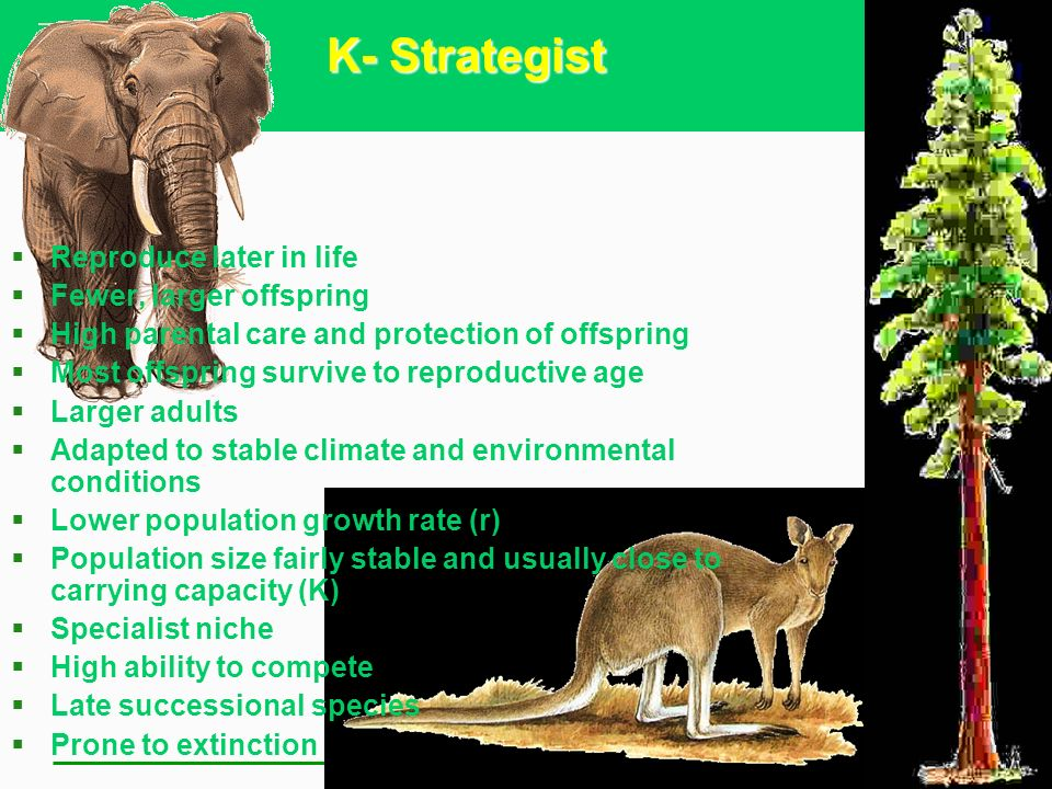 K- Strategist Reproduce later in life Fewer, larger offspring