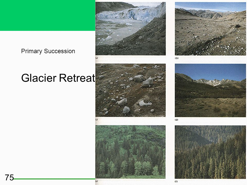 Primary Succession Glacier Retreat
