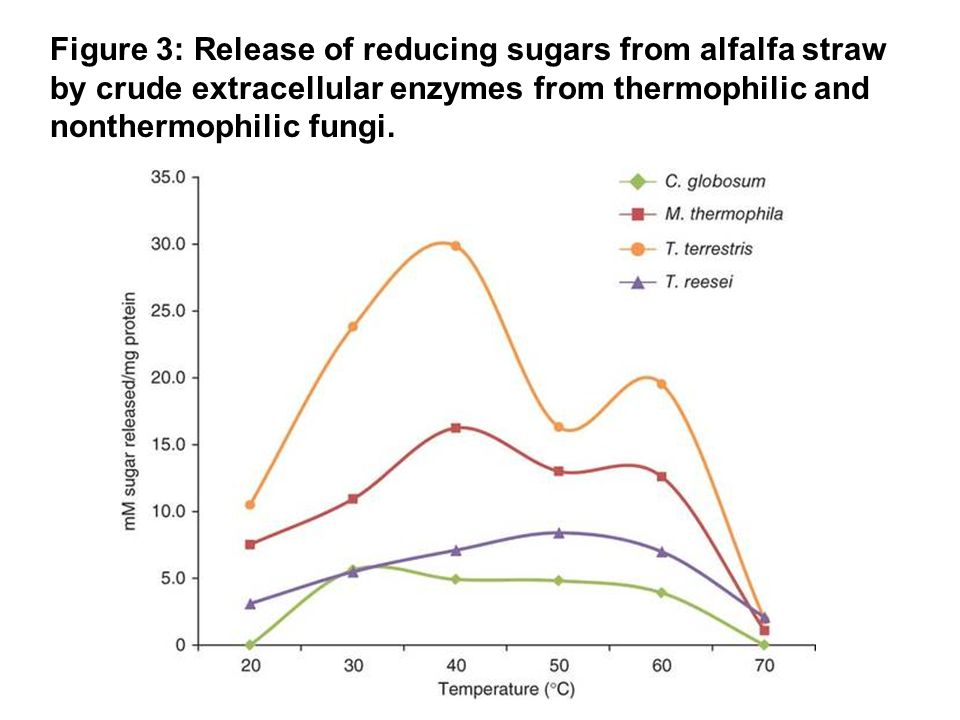 Figure 3: Release of reducing sugars from alfalfa straw by crude extracellular enzymes from thermophilic and nonthermophilic fungi.