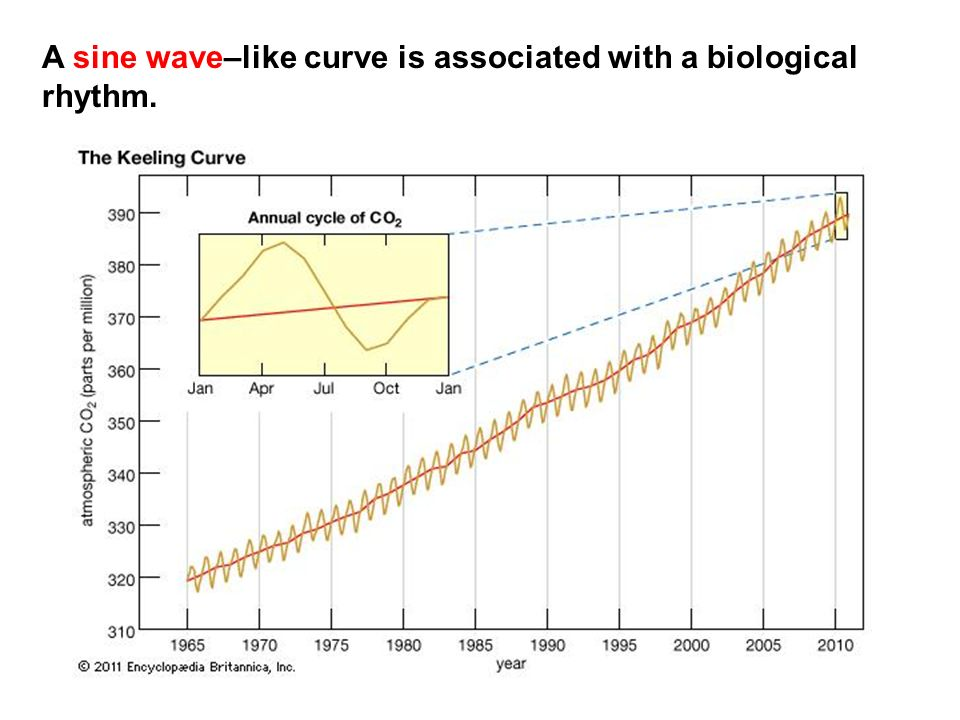 A sine wave–like curve is associated with a biological rhythm.
