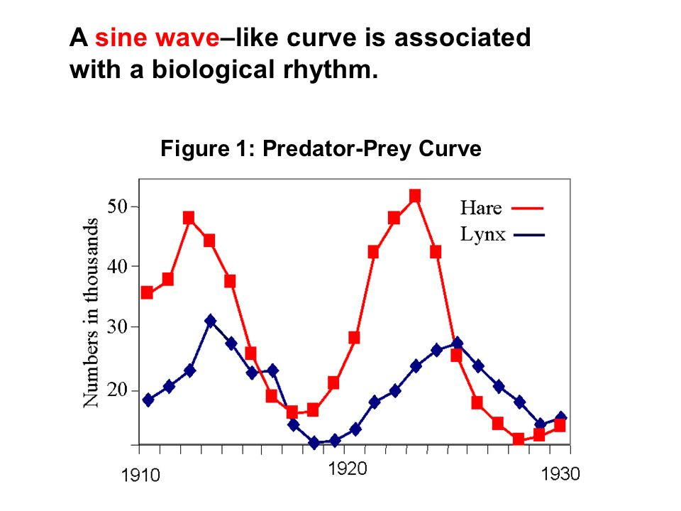 A sine wave–like curve is associated with a biological rhythm.