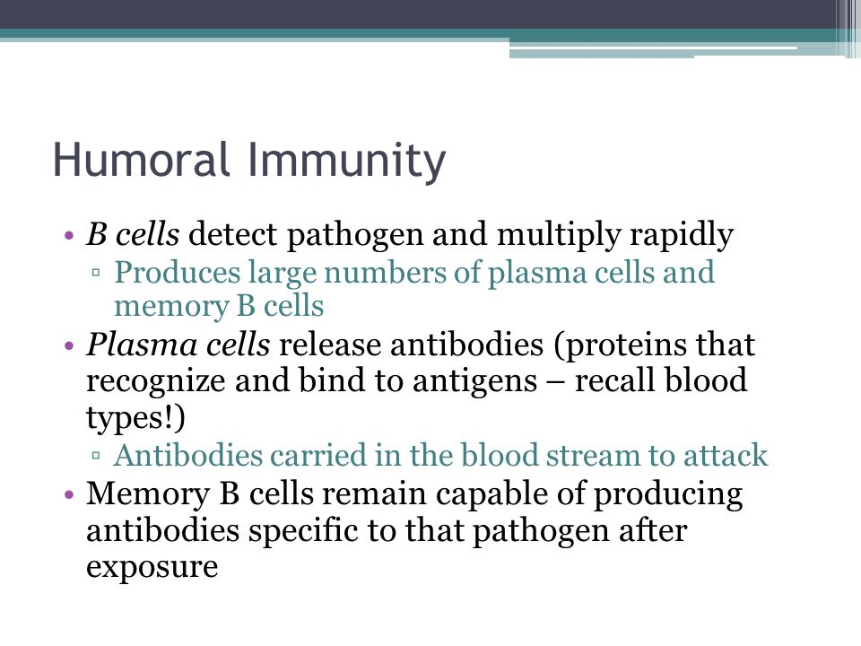 Humoral Immunity B cells detect pathogen and multiply rapidly