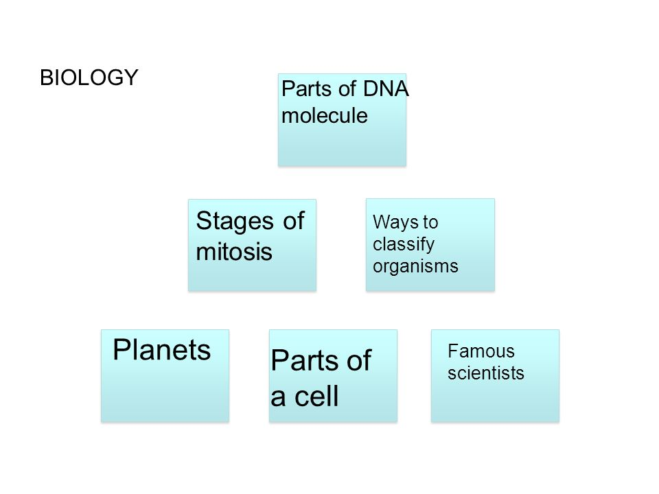 Planets Parts of a cell Stages of mitosis BIOLOGY