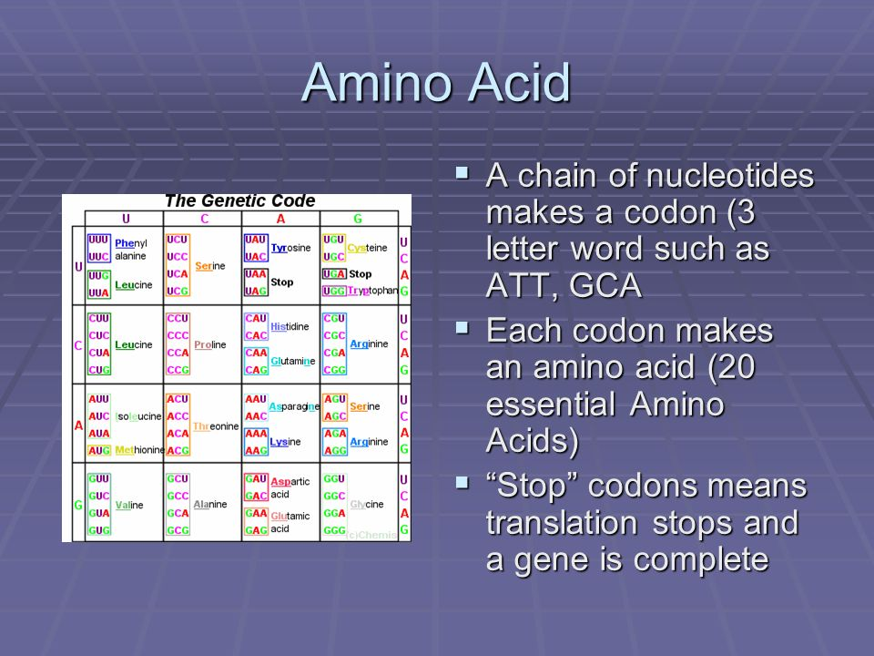 Amino Acid A chain of nucleotides makes a codon (3 letter word such as ATT, GCA. Each codon makes an amino acid (20 essential Amino Acids)