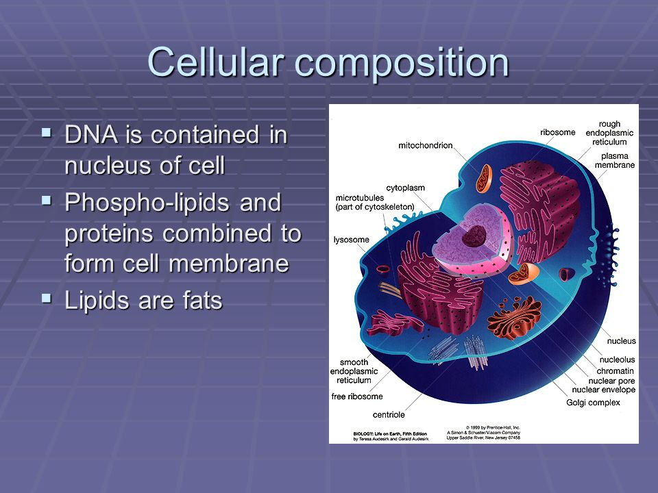 Cellular composition DNA is contained in nucleus of cell