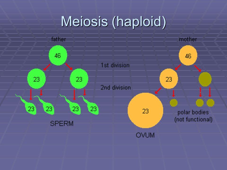 Meiosis (haploid) Meiosis, mitosis, DNA fingerprinting, gell electrophoresis, recombinant DNA, vectors, independent assortment.