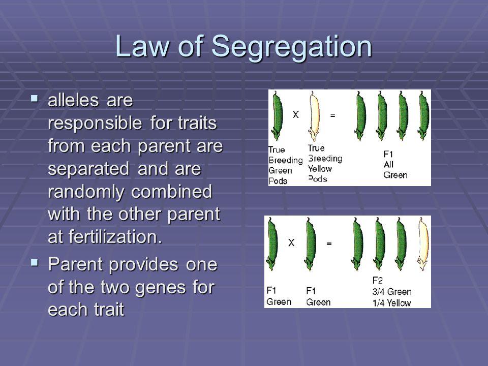 Law of Segregation