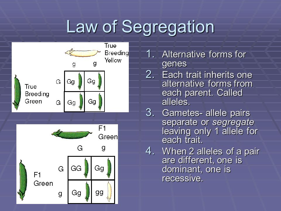 Law of Segregation Alternative forms for genes