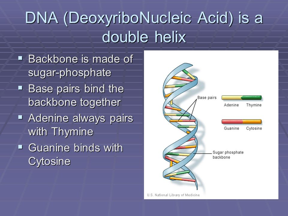 DNA (DeoxyriboNucleic Acid) is a double helix