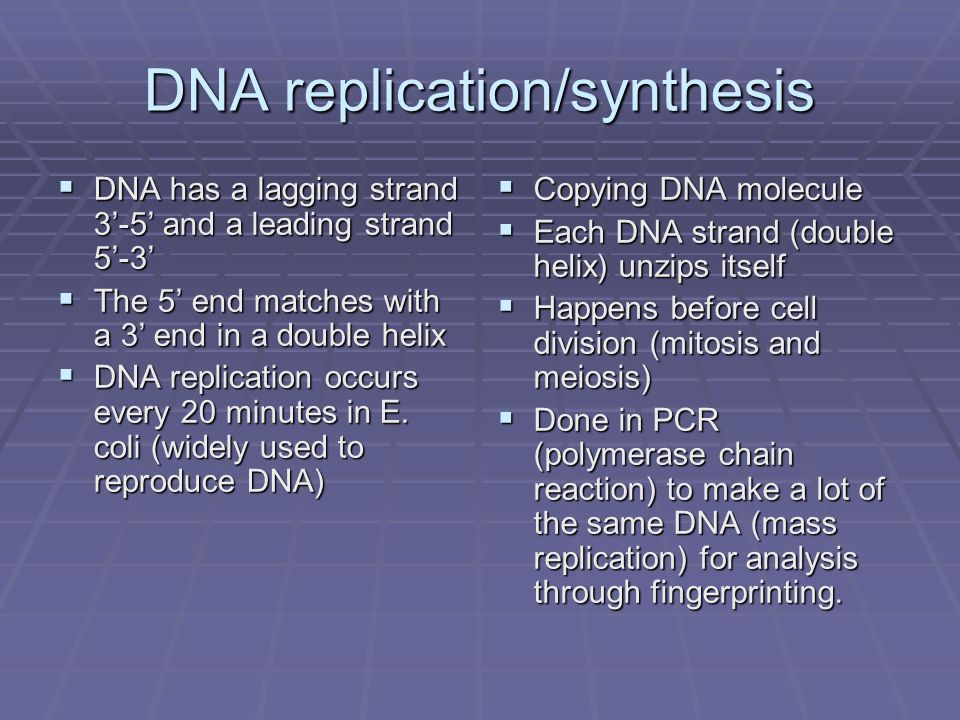 DNA replication/synthesis