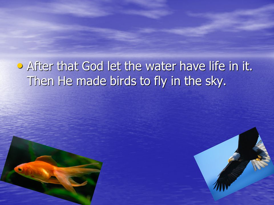 After that God let the water have life in it
