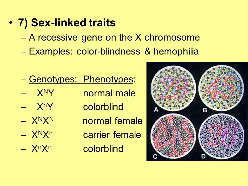 7) Sex-linked traits A recessive gene on the X chromosome