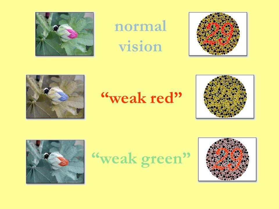 normal vision weak red weak green