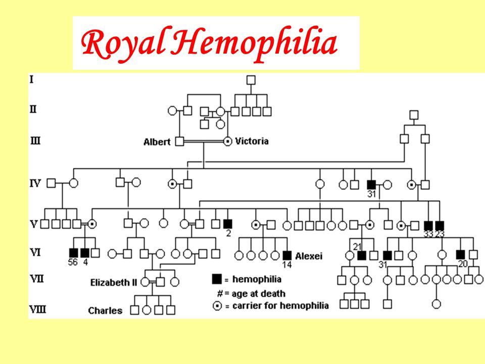 Royal Hemophilia