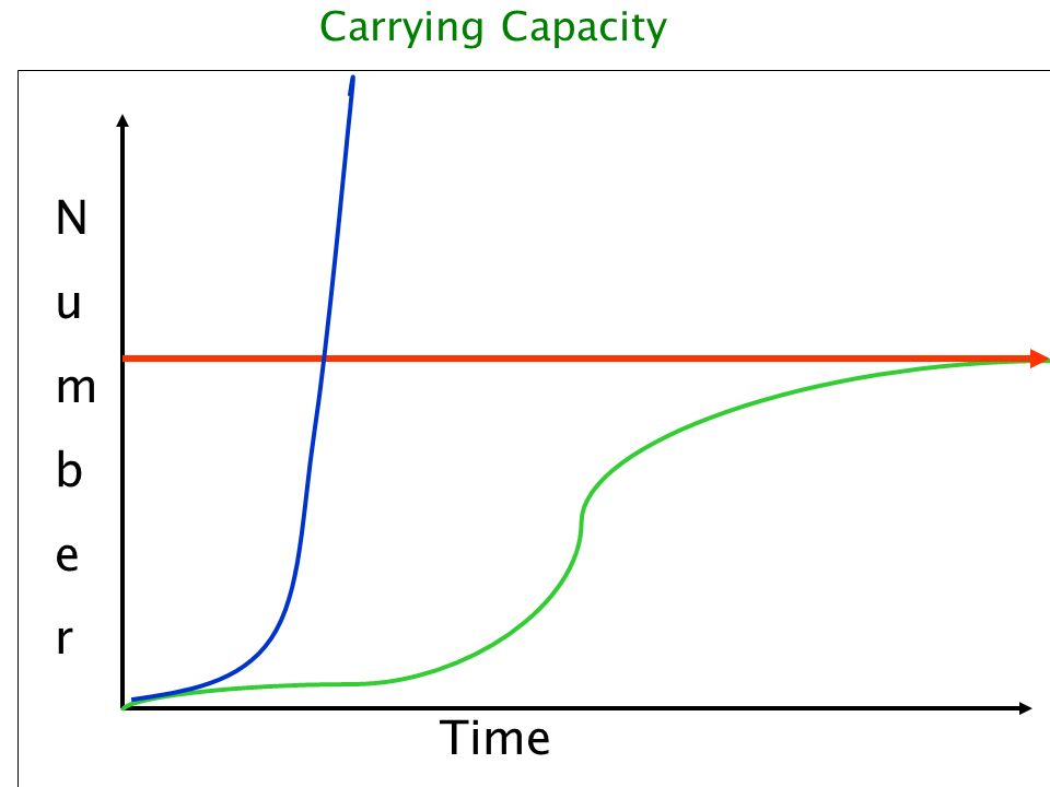 Carrying Capacity N u m b e r Ok so Time
